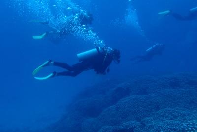 Marine conservation volunteers on a survey dive at the Shark Reef Marine Reserve and Combre Reef in Fiji