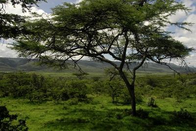 Beautiful view of Kenyan scenery