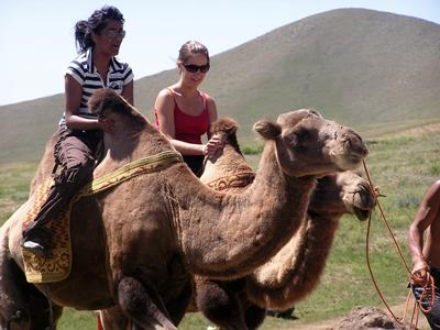 Volunteers ride camels in Mongolia