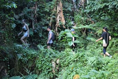 Volunteers hiking in the Samoan rainforest