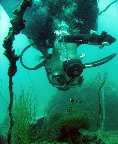 Volunteer underwater studying fish in a conservation project in Thailand, Asia