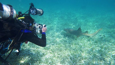 A diver photographs a shark underwater during conservation work
