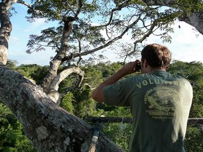 Volunteer conducts bird survey from canopy of the Amazon rainforest