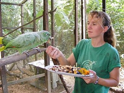 Conservation volunteer feeds parrots in Peru