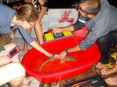 Diego collecting data on a Lemon Shark