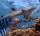 Shark Survey 2014
