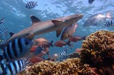 Sharks and fish under water