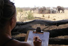 A Conservation volunteer records the population number and behaviours of a herd of elephants at a wildlife reserve in Botswana, Southern Africa.