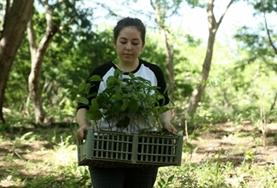 A Conservation volunteer carries a seedling to be planted in the rainforest in Costa Rica.