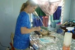 A professional vet volunteering at our placement in Samoa performs an operation on a stray dog.