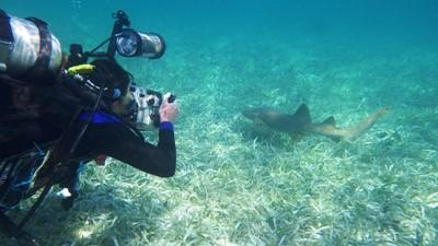 Projects Abroad volunteer diving with marine life in Belize.