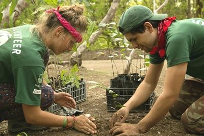 Conservation volunteers plant trees in Barra Honda National Park, Costa Rica