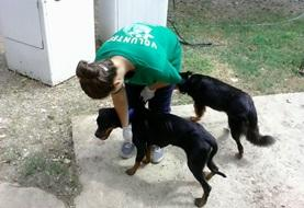Veterinary Medicine & Animal Care projects