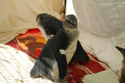 Gap Year Animal Care in South Africa