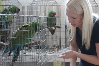A volunteer in Mexico cares for the birds at her placement