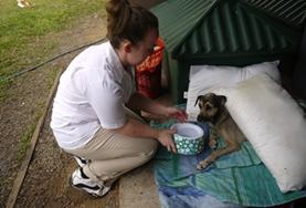 Volunteer Veterinary Medicine & <br /> Animal Care